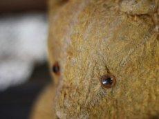 画像11: Antique Bear * (11)