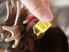 画像5: RARE!! RARE!! RARE!! Antique Steiff Moosy moose ヘラジカ/ 蚤の市 (5)
