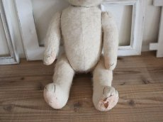 画像7: RARE!! Antique French White Bear / 17 1/2in/ France (7)