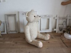 画像13: RARE!! Antique French White Bear / 17 1/2in/ France (13)