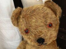 画像5: Antique Dress Bear /16 1/2in / British (5)