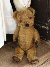 画像6: Antique Dress Bear /16 1/2in / British (6)