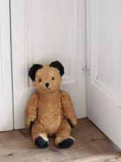 画像1: Antique Sooty Bear / 12in / Germany (1)