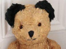 画像2: Antique Sooty Bear / 12in / Germany (2)