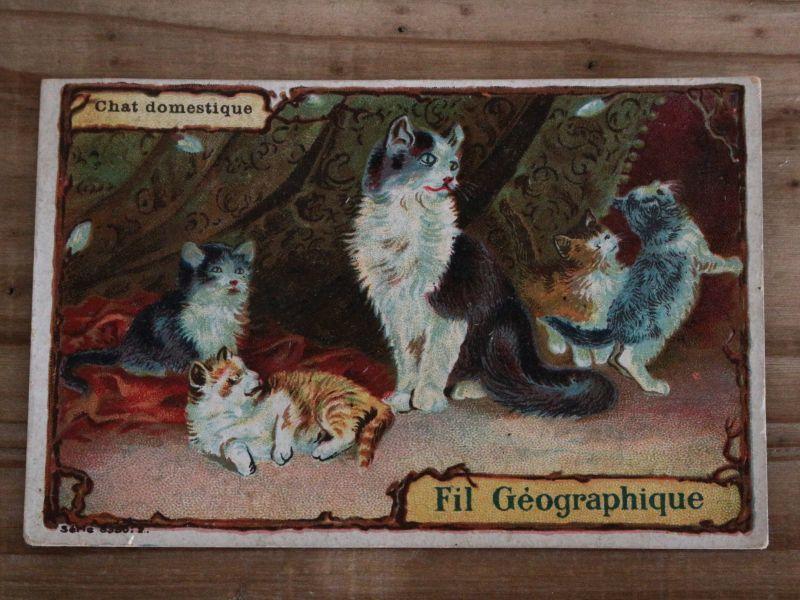 画像1: 猫たちのトレードカード/France (1)